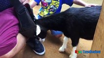 ANIMALS POOPING AT THE ZOO Kid at the ZOO Funny Family Fun Trip to Petting Farm Animals fo