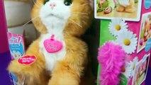 Par par chat Marguerite amis minou animal de compagnie en jouant examen jouet Furreal disneycartoys hasbro