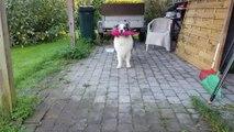 Elle a appris une petite danse à son chien... la danse du parapluie