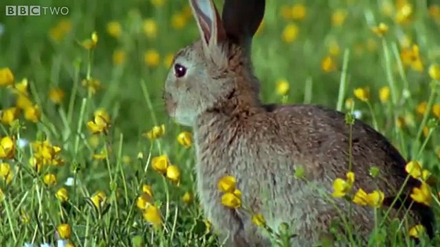 Rabbit Island - Natures Weirdest Events: Series 4 Episode 2 Preview - BBC Two