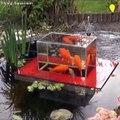 Ces poissons rouges peuvent nager hors du bassin... Magnifique