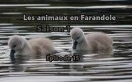 Les animaux en farandole: saison 1: épisode 15