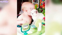 funny videos 2017 - funny pranks - Try not to laugh or grin challenge HARDEST VERSION Cat Edition - Pranks, Laugh , Grin