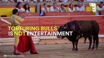 Bullfighting is NOT a sport