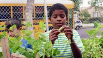 Whole Kids Foundation® Launches Growing Healthy Kids Campaign, Raising Money for School Salad Bars, Gardens, and Beehive
