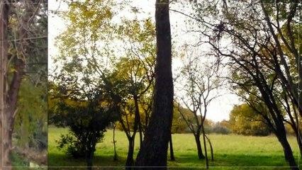 A vendre - Maison/villa - Carpentras (84200) - 12 pièces - 150m²