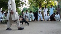 Aseel Murga Fight - video dailymotion