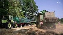 Re: Weizen oder Wohnen in München - Bauern gegen Städteplaner (Doku)