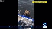 2 bébés ours brun sauvés de la noyade dans un lac par des pêcheurs en Russie !