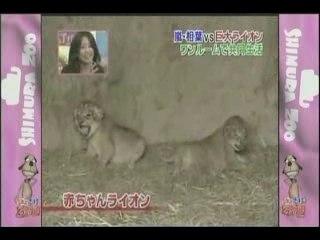 Aiba Speaks English.