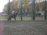 CSO avec mon cheval 80 cm