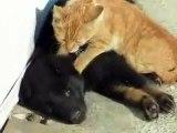 Quelle tendresse !!! un chat fait un doux massage à un chien avec ses pattes avant