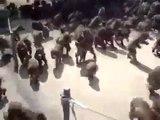 Des centaines de singes deviennent fou au moment du repas dans ce zoo... Impressionnant