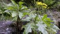 Natures Wonderlands Islands Of Evolution - S1 - E3 - Madeira- Island Ark - Feb 01, 2016