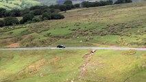 Alpina B3: Perfect Road Car (Thrashed on Track) -- /CHRIS HARRIS ON CARS