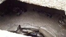 Voilà ou se réfugient les serpents en hiver... et il ne vaut mieux pas tomber dans le trou