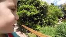 VLOG - Pique-nique et Animaux Rigolos au Parc de la Tête dOr :)
