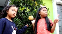 Squishy Dares ♥ Indonesia | Cut IBloom Keira Charma ? Squishy Dares Gone Wrong
