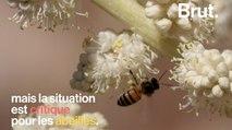 """Les miels du monde contaminés par des insecticides """"tueurs d'abeilles"""""""