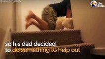 Belle vidéo du jour :vous allez littéralement fondre en regardant ce chiot qui découvre les escaliers pour la première