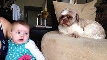 Quand ton chien n'en peut plus du bébé qui pleure et réussit à le faire taire!