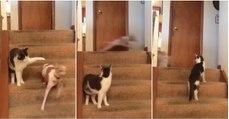 """Apenas um cão em modo """"Turbo"""" perante um gato que não percebe o que se está a passar..."""
