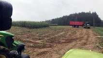 Un champs de maïs abrite une dizaine de sangliers !