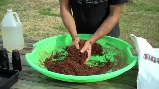 Seeding for the Aquaponics Systems