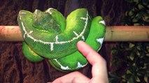12 Different Green Tree Pythons & Emerald Tree Boas