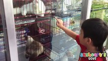 Toddler visits a PET SHOP | Dogs, Cats, Puppies, Kittens. Family playtime toys for kids