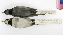 Polusi udara: Burung kotor tua menunjukkan perubahan polusi udara selama 135 tahun - TomoNews