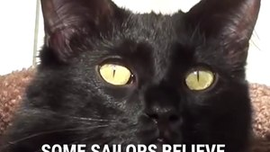 Black Cats Are Actually Good Luck