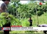 Polisi Temukan 4 Hektar Ladang Ganja