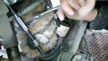 Ils retrouvent un chat coincé dans un amortisseur de voiture... Dingue