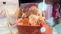 AG Spring Cleaning! Tips/ Tricks - Organizing and Cleaning my Bitty Baby Collection!