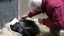 59-year-old chimpanzee 'Mama' is sick and refuse food until she recognized her old friend
