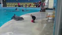 """Ce gamin et ce dauphin jouent à la """"va chercher"""" comme avec un chien... Trop mignon"""