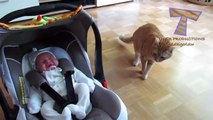 Cats and dogs meeting babies for the first time - Cute animal compilation-YB2WHOtmSHQ