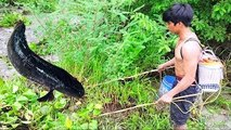 Pumping Water and Catch a lot of Fish in Pond - How to Catch Fish by Electricity