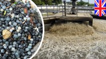 Limbah tanaman bocor melepas plastik-plastik kecil ke laut Inggris - TomoNews