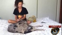 Dog Mauls Girl Videos De Mujeres Y Perros 8 Mujeres Que Juegan Con Los Perros By Melodicspiritz07