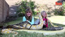 Snake vs 3-year-old- Lizard King Dad Lets Kids Play With Huge Reptiles