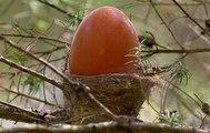 Loài chim nhỏ làm cái tổ cũng nhỏ