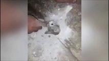 Regardez ce qu'a trouvé cet homme en refaisant le mur du garage... Pauvre chaton coincé