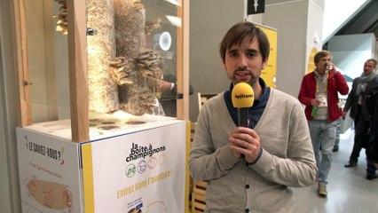 La Boite à Champignons, une entreprise de l'Economie Sociale et Solidaire (TV)