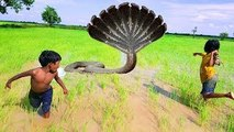 Wow! Poor Asian Kids Catch Very Big Snake While Catching Frogs In Their Rice Fields