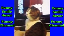 funny cats fails videos 2016 _ funny cat and animals compilation vines try not to laugh or grin #L-lPv477PFMV8