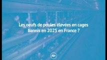 Les oeufs de poules élevées en cages bannis en 2025 en France ?