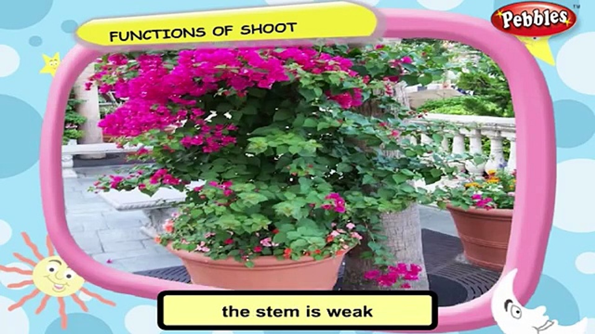 Science For Class 3 : Plant Life | Science Videos For Kids | Science Projects