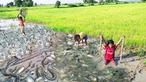 Amazing Fishing Catch Snakes and Fish by Hand - Three Little Girls Catch A lot Of Fish in